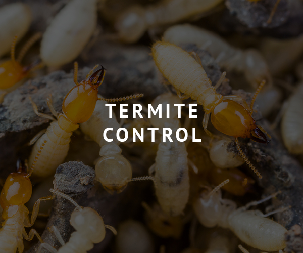 Brunson Pest Control Termite Control
