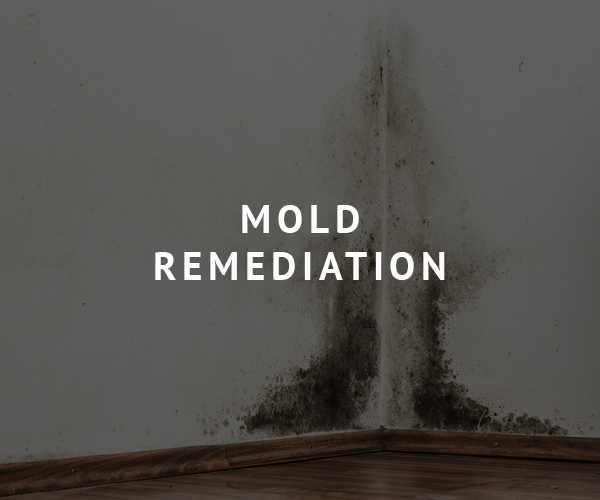 Brunson Pest Control Mold remediation